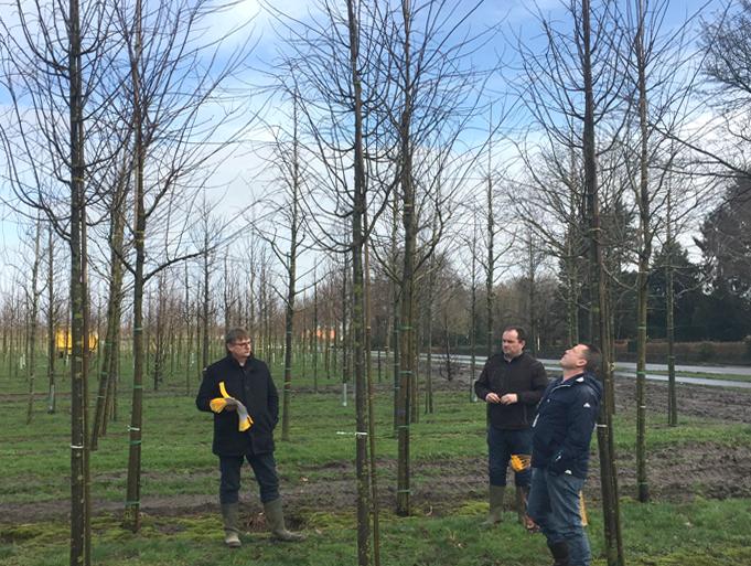 2018-02-13-harderwijk-ebben-bomen-uitgbezocht-nieuws