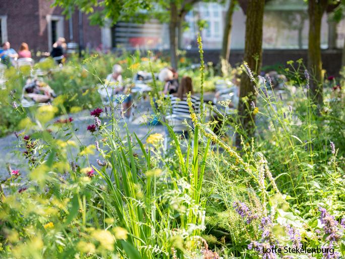 2020-07-31-tuin-rmt-fotografie-lotte-stekelenburg-www-nieuws